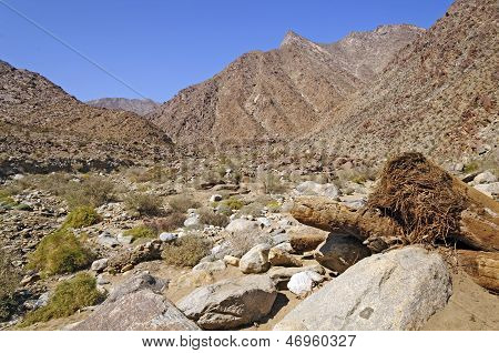 Desert Canyon In Spring