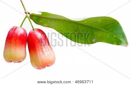 water apple, chomphu, rose apple