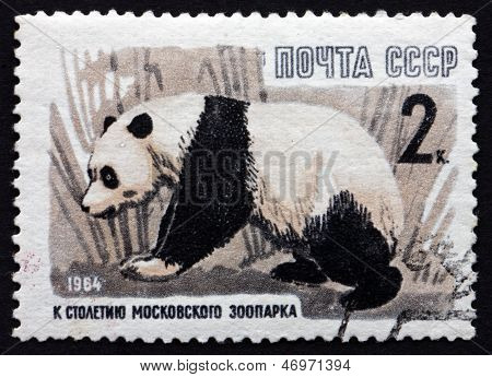 Postage Stamp Russia 1964 Giant Panda, Animal