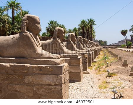 The avenue of Sphinx at Luxor Temple, Egypt