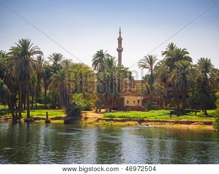 Bank of the upper river Nile
