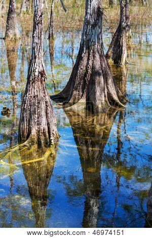 Landscapes in Everglades National Park