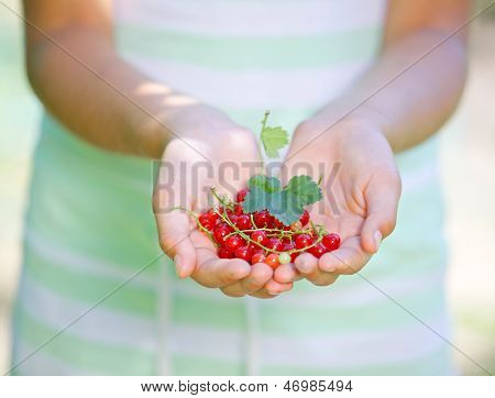 Hands holding red currant