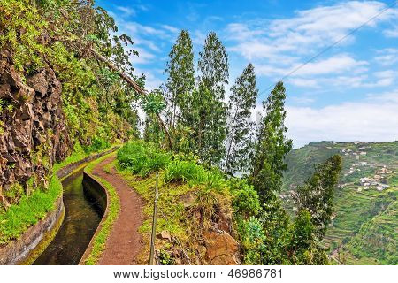 Along The Levada, Madeira