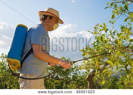 Spraying A Citrus Plantation