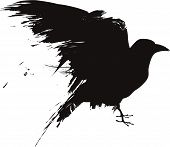picture of raven  - A vector illustration of a raven or crow in a grunge style - JPG