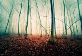 foto of rainy season  - trees in the autumn mist - JPG