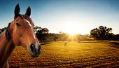 stock photo of farm animals  - Sun Setting on a Peaceful Farm with horse in the foreground - JPG
