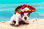 pic of mexican-dog  - French bulldog puppy in Mexican sombrero on the beach - JPG