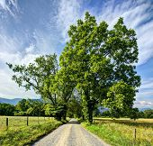 picture of gatlinburg  - Sparks Lane in Cades Cove near Gatlinburg - JPG