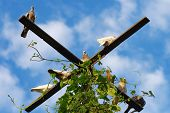 stock photo of pigeon loft  - Pigeon Birds sitting with Blue Sky with clouds on Background - JPG