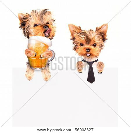dog with bunner isolated
