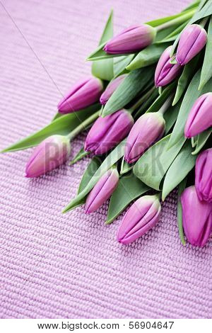 lovely tulips on pink - flowers and plats
