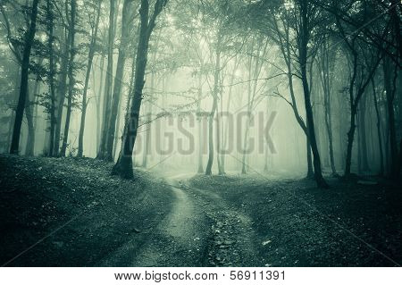 Road trough a eerie spooky creepy dark forest with fog