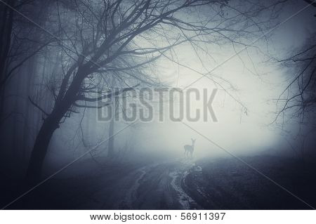 Deer in thick fog in a dark spooky eerie and creepy forest