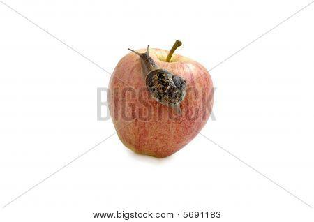 Garden Snail And Ripe Apple.