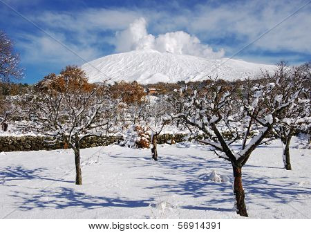Etna Park and snowcovered orchard, Sicily