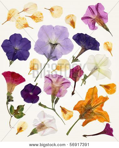 Isolated vector Flowers for your design.