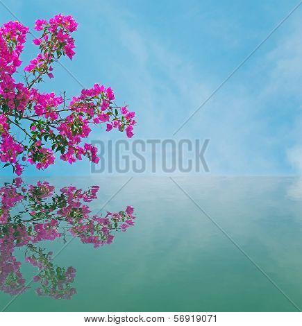Bouganvillea Reflection
