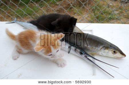 Gatinhos com peixes