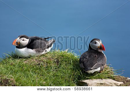 Couple Of Puffins On A Rock