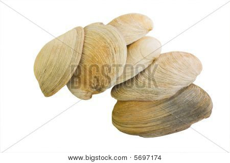 Gourmet Mollusk Shells