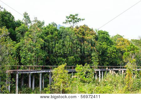 Bridge Through The Mangrove Reforestation