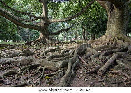 Primeval rainforest