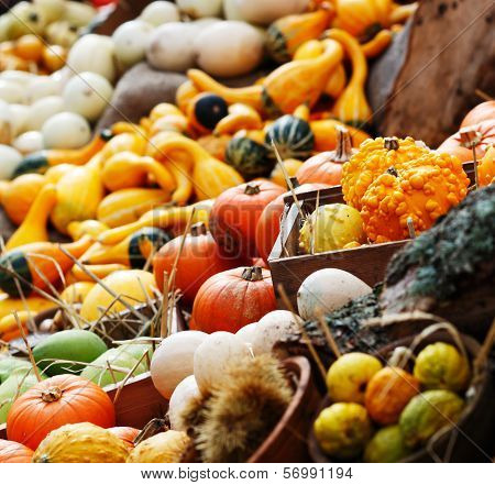 Composition of pumpkins and summer and winter squashes