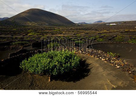 Lanzarote Spain Cultivation Viticulture Winery