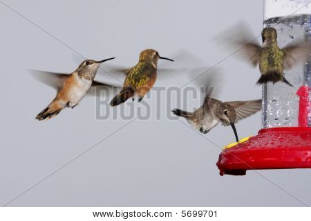 Swarm Of Hummingbirds At A Feeder