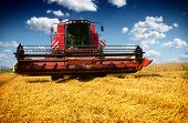 pic of tractor  - Combine harvester harvesting wheat on sunny summer day - JPG