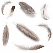stock photo of rooster  - Collage of fluffy feathers isolated on white - JPG