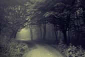 stock photo of trough  - Road going trough a dark spooky forest with fog - JPG