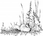 hand drawn snail in the grass