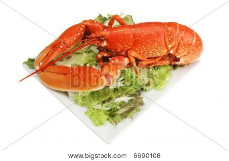 Cooked Lobster On A Plate Of Salad
