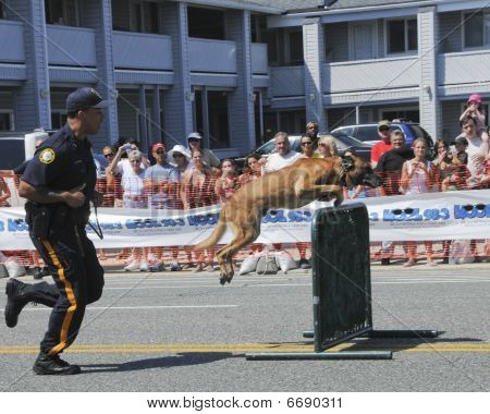 Police Dog Approaching a Hurdle