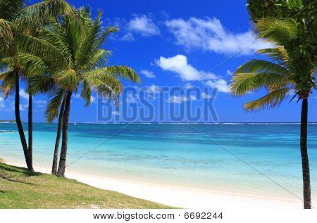 Paradise Beach In Mauritius Island