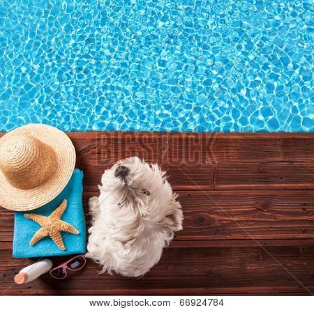 Concept of summer with dog and accessories on wood