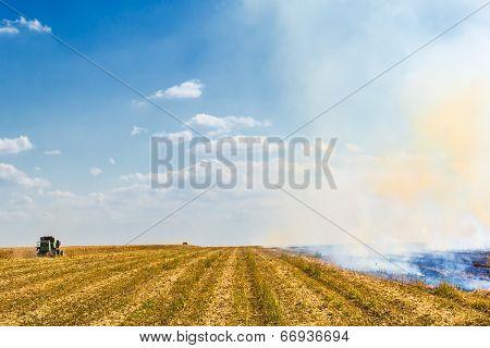 Autumn Harvesting Corn In A Field