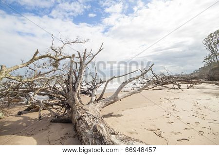 Driftwood and footprints on beach