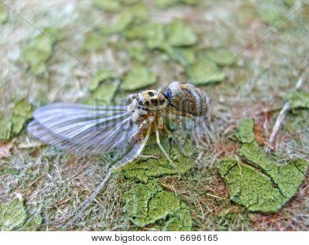 Spider And Ephemera