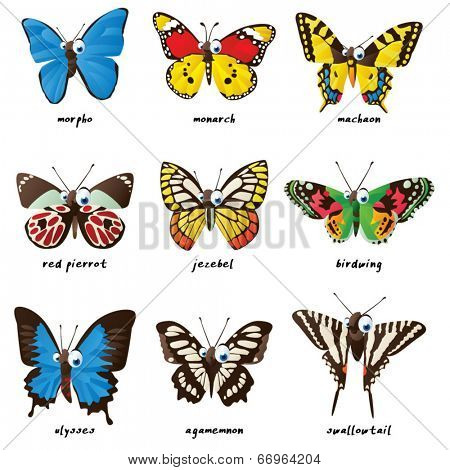 Butterflies: agamemnon, morpho, red pierrot, jezebel, birdwing, machaon, monarch, ulysses, swallowtail