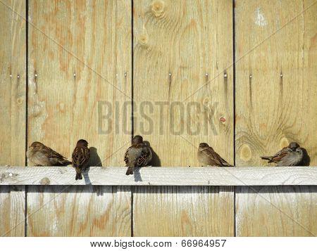 Steepe birds