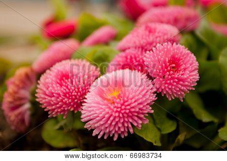 Few Purple Pink Flowers