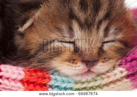 Neonate Kitten