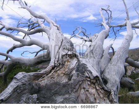 Trees in Torres Del Paine National Park  in Patagonia