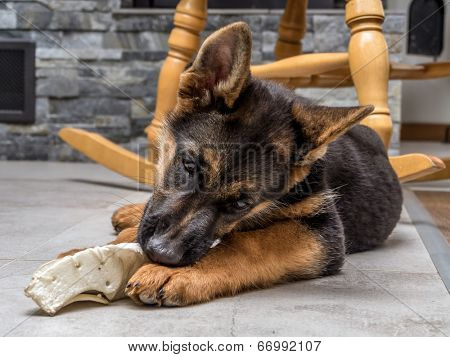 German shepherd puppy playing with pet toy on the floor