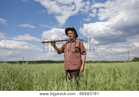 Peasant In Oat Field