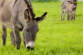 picture of soma  - the group of donkeys near the wall - JPG
